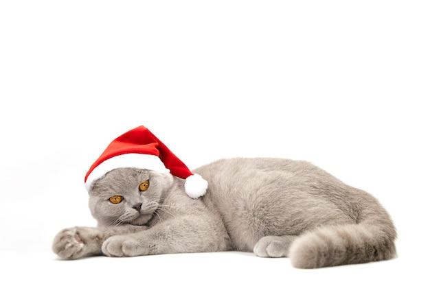 Grijze schotse kat met rode hoed op wit