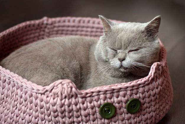 Grijze schotse kat slaapt in een roze kattenbed