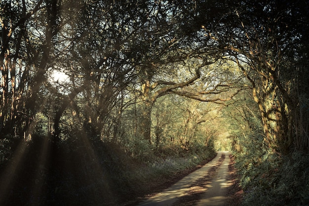 Grijze weg tussen bomen overdag