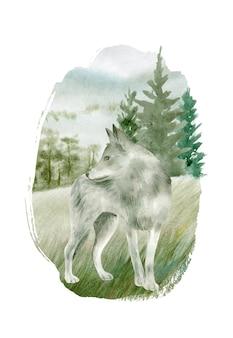 Grijze wolf aquarel geïsoleerd op een witte achtergrond.