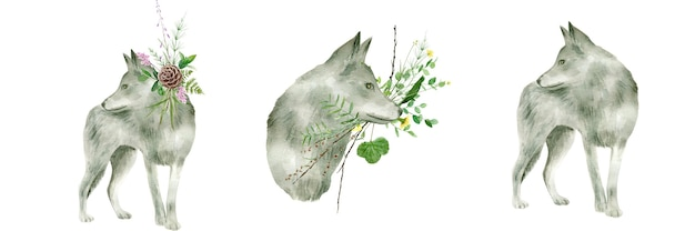 Grijze wolf aquarel geïsoleerd op wit.