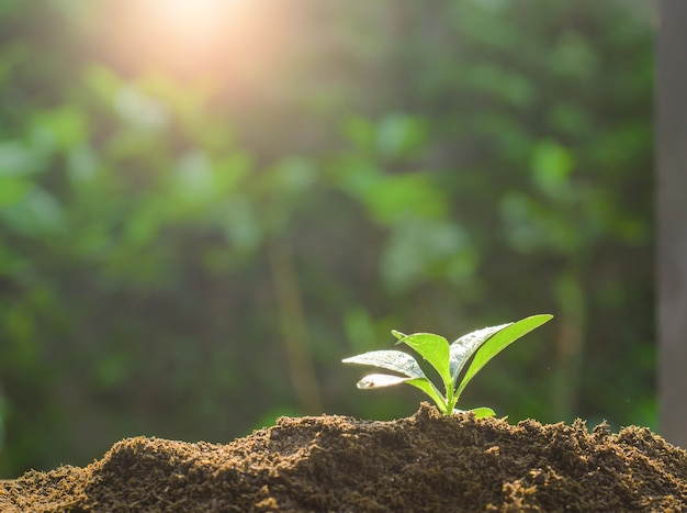 Groei, kleine plant die opgroeit uit de grond
