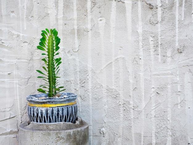 Groeiende groene cactus plant in keramische pot op witte grunge muur achtergrond met kopie ruimte.
