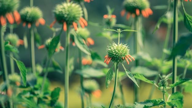 Groeiende groene plant