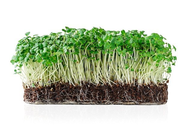 Groeiende micro greens rucola spruiten met potgrond geïsoleerd op een witte muur. uitknippad