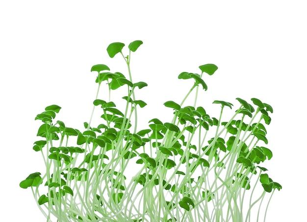 Groeiende microgreens geïsoleerd op wit