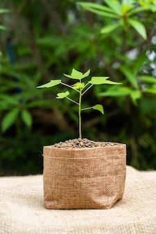 Groeiende plant in een zak