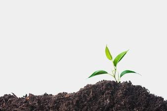 Groeiende plant op de bodem tegen een witte achtergrond