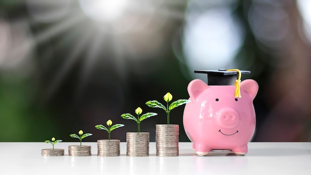 Groeiende plant op muntstapel en afgestudeerde hoed op spaarvarken op wazig groen natuur achtergrond onderwijs en financiën concept.