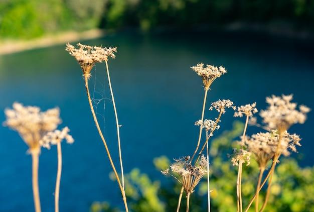Groeiende planten op vijvers in de bergen