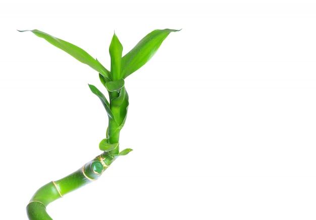 Groen bamboe dat op een witte achtergrond wordt geïsoleerd