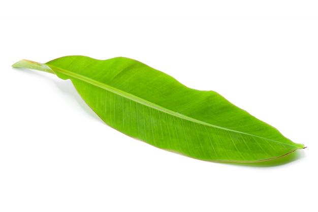 Groen banaanblad dat op witte achtergrond wordt geïsoleerd