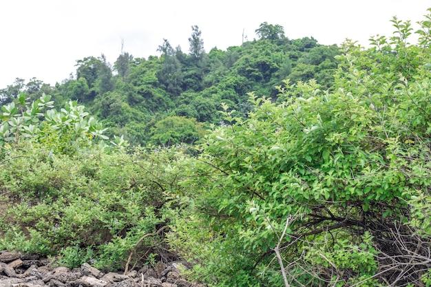 Groen bergbos onder de mistige bewolkte hemel