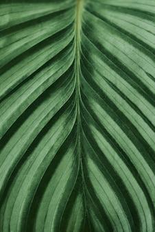 Groen blad close-up achtergrond