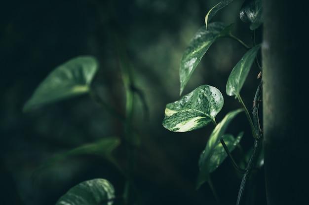 Groen blad in tuin, aardscène met groen blad van de installatieraad in tuin