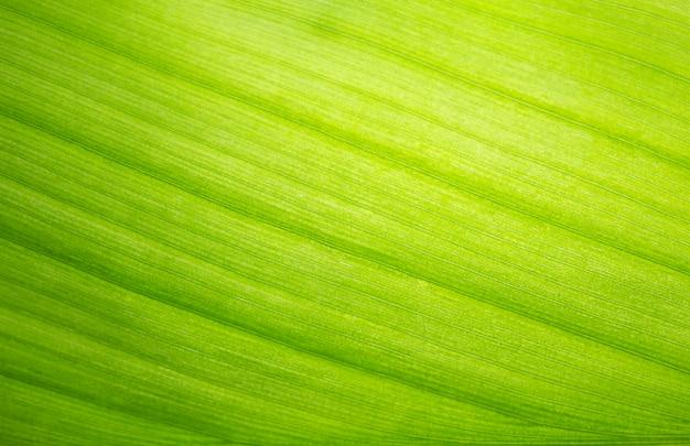 Groen blad, macro, zoom
