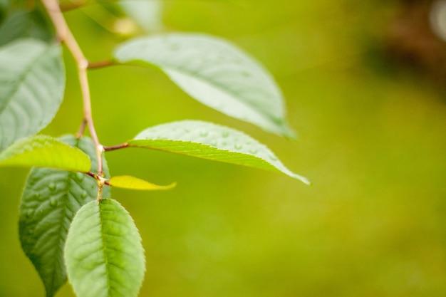 Groen blad macroschot. gebladerte achtergrond.