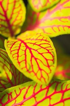 Groen blad met rood patroon