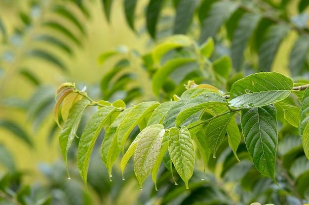Groen blad met waterdalingen