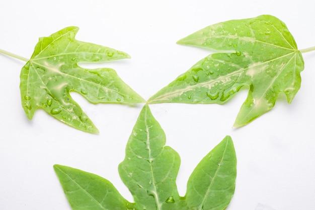 Groen blad met waterdruppels, close-up op witte achtergrond