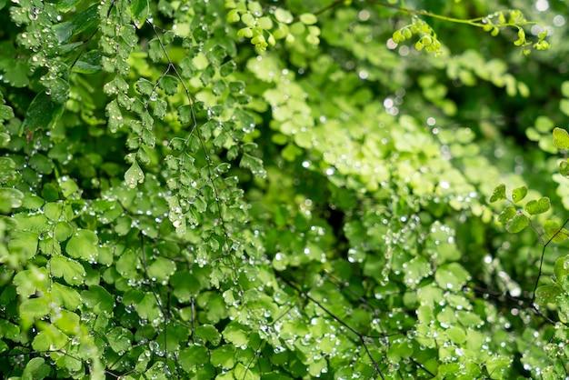 Groen blad met waterdruppels of waterdruppels