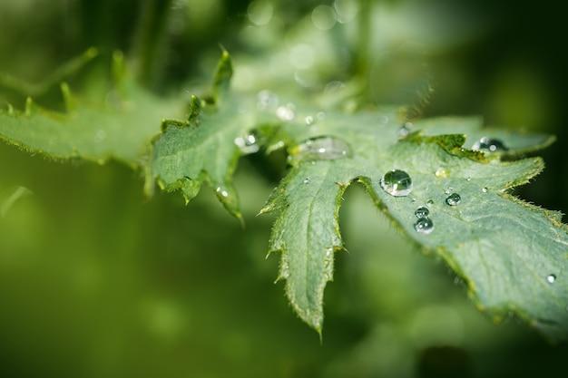 Groen blad met waterdruppels