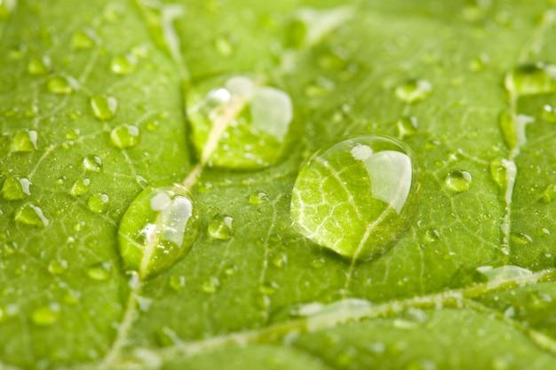 Groen blad met waterdruppeltjes