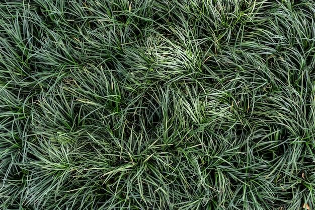 Groen blad op donkergroene textuurachtergrond