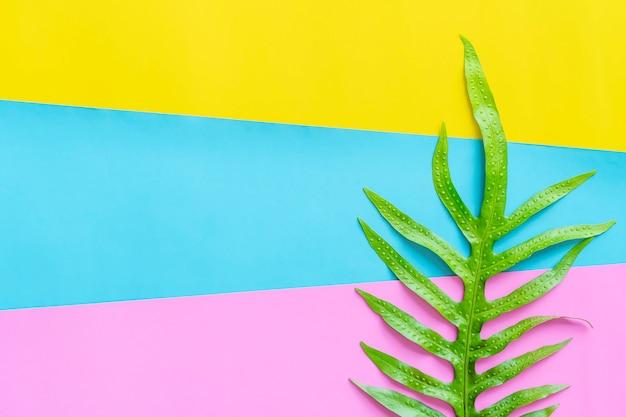Groen blad op kleurrijke achtergrond met vrije ruimte. natuurlijke achtergrond.
