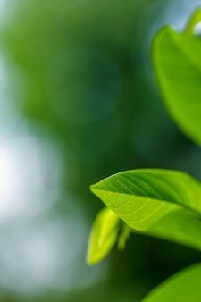 Groen blad patroon