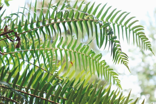 Groen blad plant