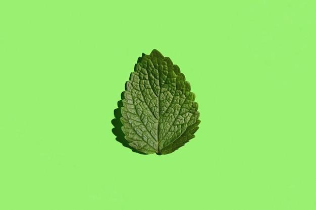 Groen blad van citroenmelisse (melissa) in het midden van de groene achtergrond, bovenaanzicht.