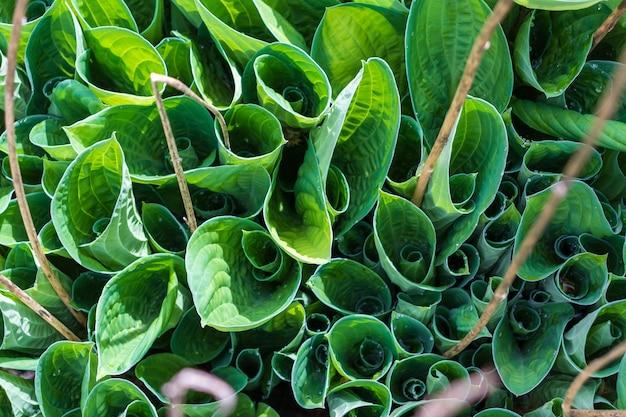 Groen blad van een tuinplant macrofotografie. close-up foto. verse greens met diepe schaduwen