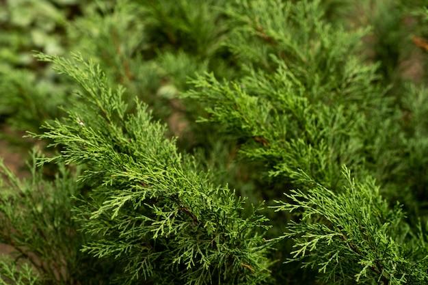 Groen blad van exotische bloemmonstera.