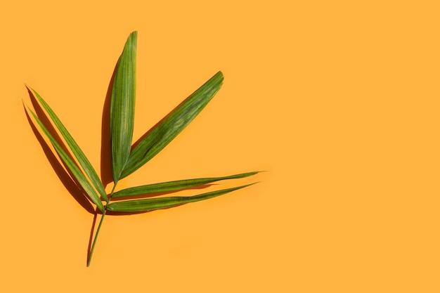 Groen blad van palmboom op sinaasappel