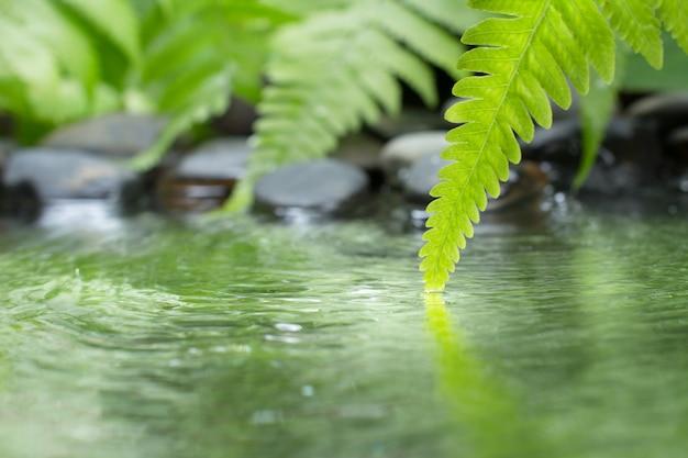 Groen blad van plant met varen en kiezelsteen op water