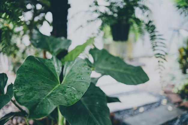 Groen blad van tropische bosplant die in de natuurtuin leeft, exotische jungle gebladerte achtergrond, palm bloemen en monstera, plantkunde flora decoratie in de omgeving