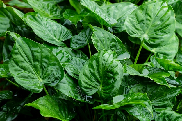 Groen bladerenclose-up
