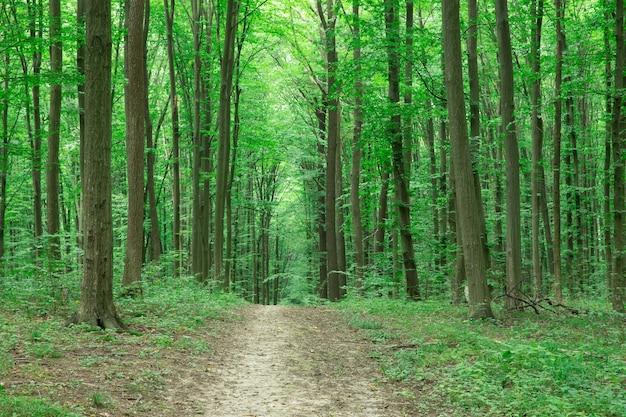 Groen bos bomen landschap