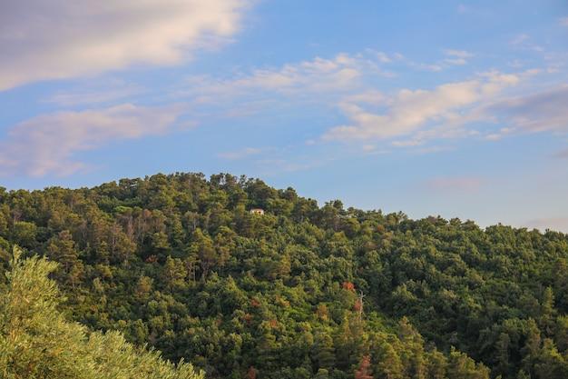 Groen bos en de blauwe zonsonderganghemel op het eiland skiathos in griekenland