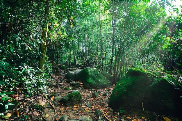 Groen bos met lichtstraal