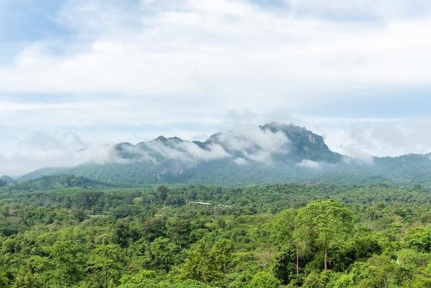 Groen bos op bergketenlandschap met blauwe en bewolkte hemel