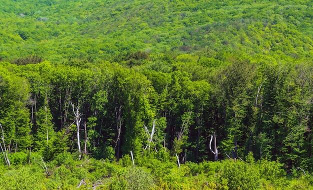 Groen bos op de berghelling