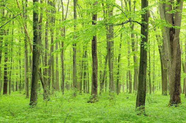 Groen bos op een zonnige dag