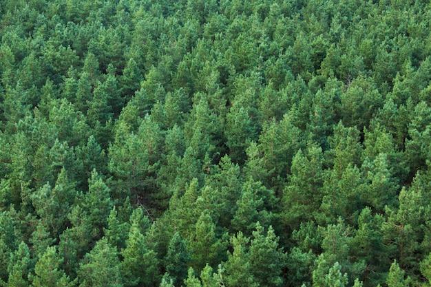 Groen bos uitzicht vanaf de top