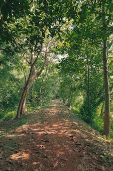 Groen boslandschap in de lentetijd en groen mos, zonlicht dat door het bos schijnt