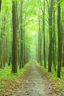 Groen bosoppervlak in zonnige dag Premium Foto