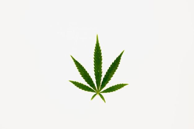 Groen cannabisblad