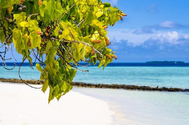 Groen die boomgebladerte door zon bij wit zandstrand wordt aangestoken op het tropische eiland van paradijsmaldiven