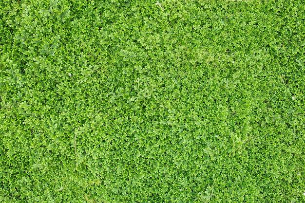 Groen doorbladert van plantentextuur.